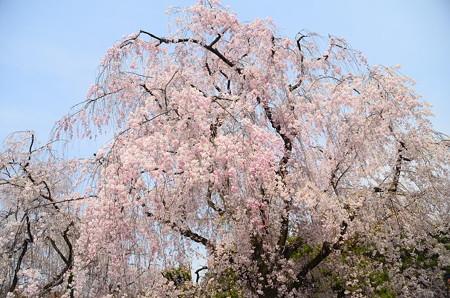 春空を染めて~