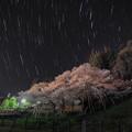 Photos: 臥龍桜と夜空