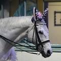 写真: 川崎競馬の誘導馬04月開催 桜Verその2-120409-17-large