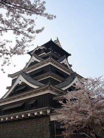 熊本城&桜
