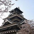 Photos: 熊本城&桜