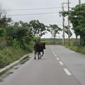 牛がにげた