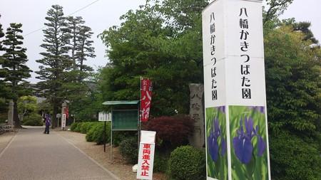 14052010_八橋かきつばた園