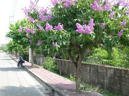 花いっぱいのチェンマイ(6) DSCN4894_R