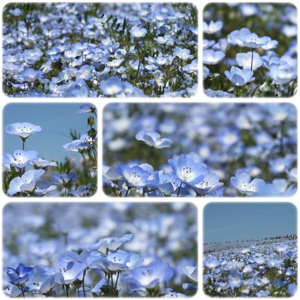 青い世界のハーモニー♪