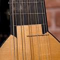 マンドーラ(Mandola)弦