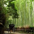 竹林の道を行く人力車