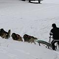写真: 011 浅間高原ウィンターフェスティバル犬ぞり2