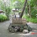 Photos: 39-高知 高知市 山内神社  かめ石-20001021-002