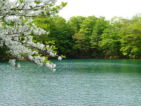 緑をたたえる沼〜船形連峰自然公園 升沢遊歩道(2)