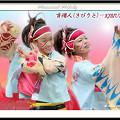 写真: 吉備人(きびうと)-KIBIUTO-_スーパーよさこい2008_04
