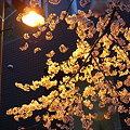 写真: 市ヶ谷の花見03