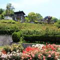 Photos: バラの咲く公園