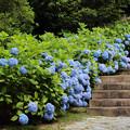 花の階段行き着く先は!