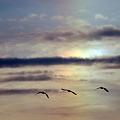 虹(幻日)に飛ぶ