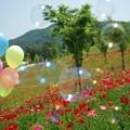 Photos: IMGP3821_0527