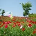 Photos: IMGP3852_0527