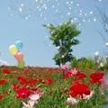 Photos: IMGP3999_0527