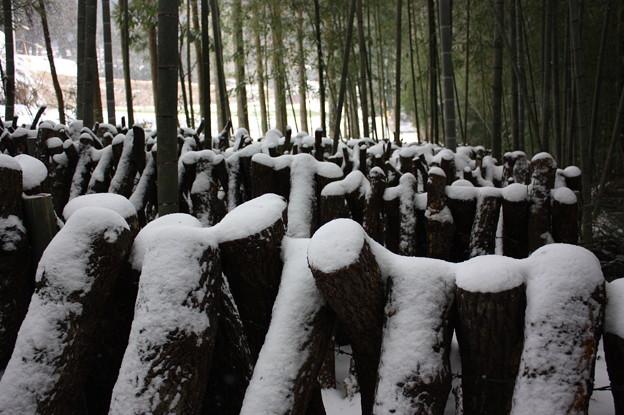 ナバ木のスクラム