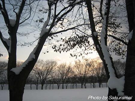 寒い公園の朝