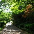 新緑_杉村公園15
