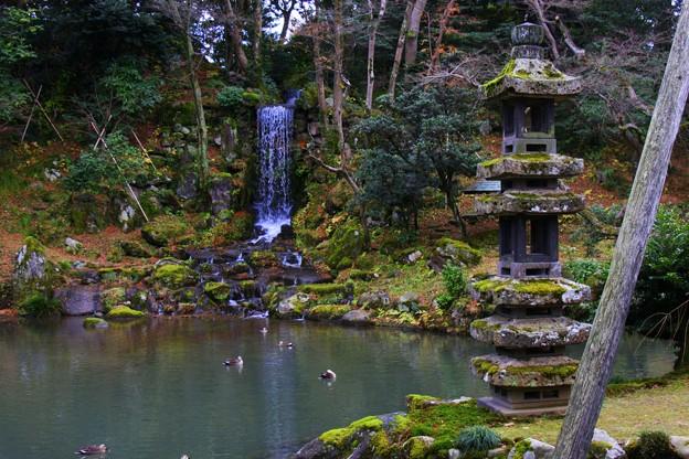 兼六園 翠滝と海石塔 カモの行水(@_@;)