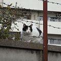Photos: 水門猫さん(R0010178)