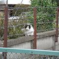 写真: 水門猫さん(R0010181)