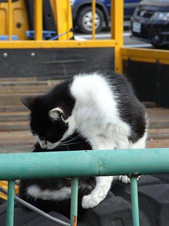 水門猫さん(R0012347)