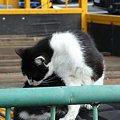 写真: 水門猫さん(R0012347)