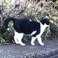 写真: 水門猫さん(K3100856)