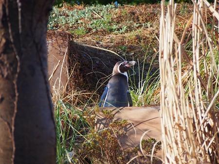 20140330 ペンヒル 雨上がりのペンギンヒルズ03