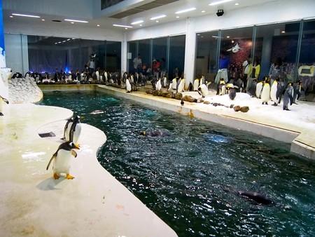 20140502 アドベン ペンギンオンアイス09