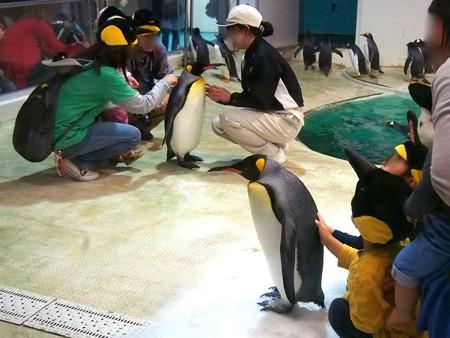 20140502 アドベン ペンギンオンアイス05
