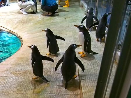 20140502 アドベン ペンギンオンアイス03