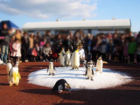20131207 アドベン ペンギンパレード11