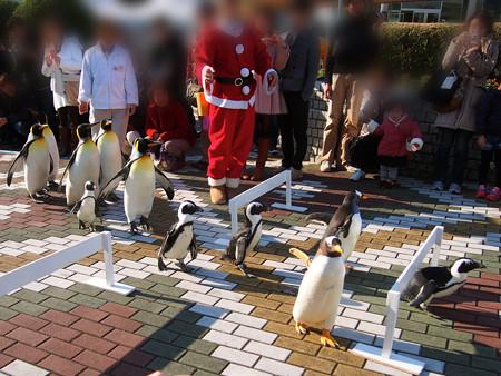 20131207 アドベン ペンギンパレード08