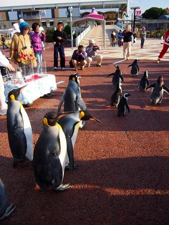 20131207 アドベン ペンギンパレード34