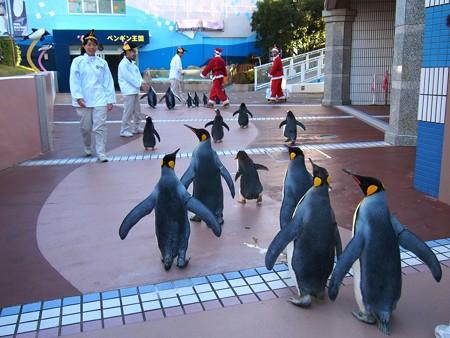 20131207 アドベン ペンギンパレード42