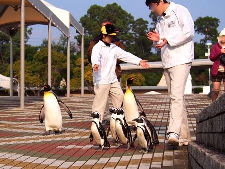 20131206 アドベン ペンギンパレード05