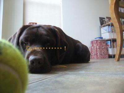 ボールの動きを観察するのが好き♪