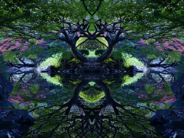 Symmetric Symmetry