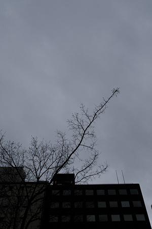 2009-03-22の空