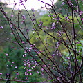 Photos: 梅ですか?桃ですか?冬ですか?春ですか?