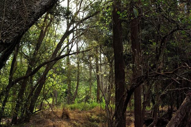 雑木林にて