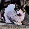 Photos: 夜の野良猫?