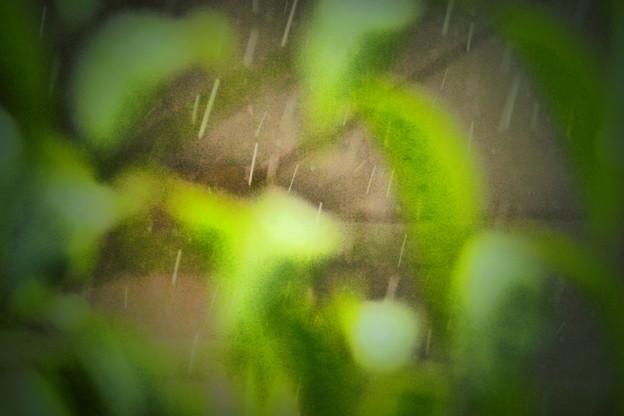 Photos: 通り雨?