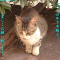 写真: 「屋根の上の野良猫」からも…