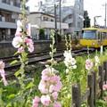 Photos: 彩の朝
