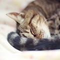 Photos: しっぽとw
